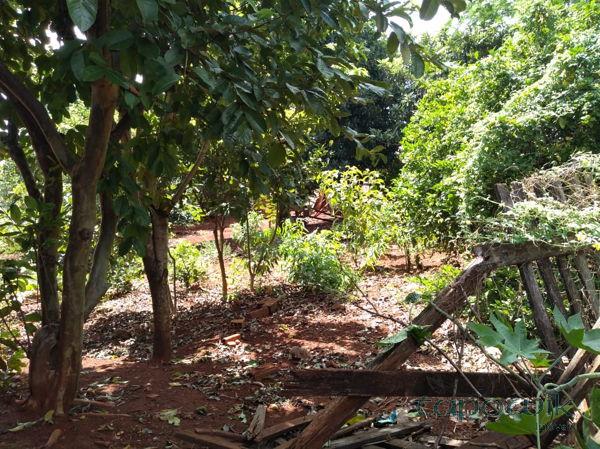 Jardim Modelo